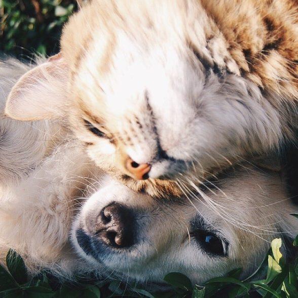 Стерилизация котов 2014