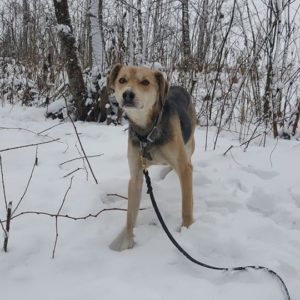 Suns no dzīvnieku patversmes