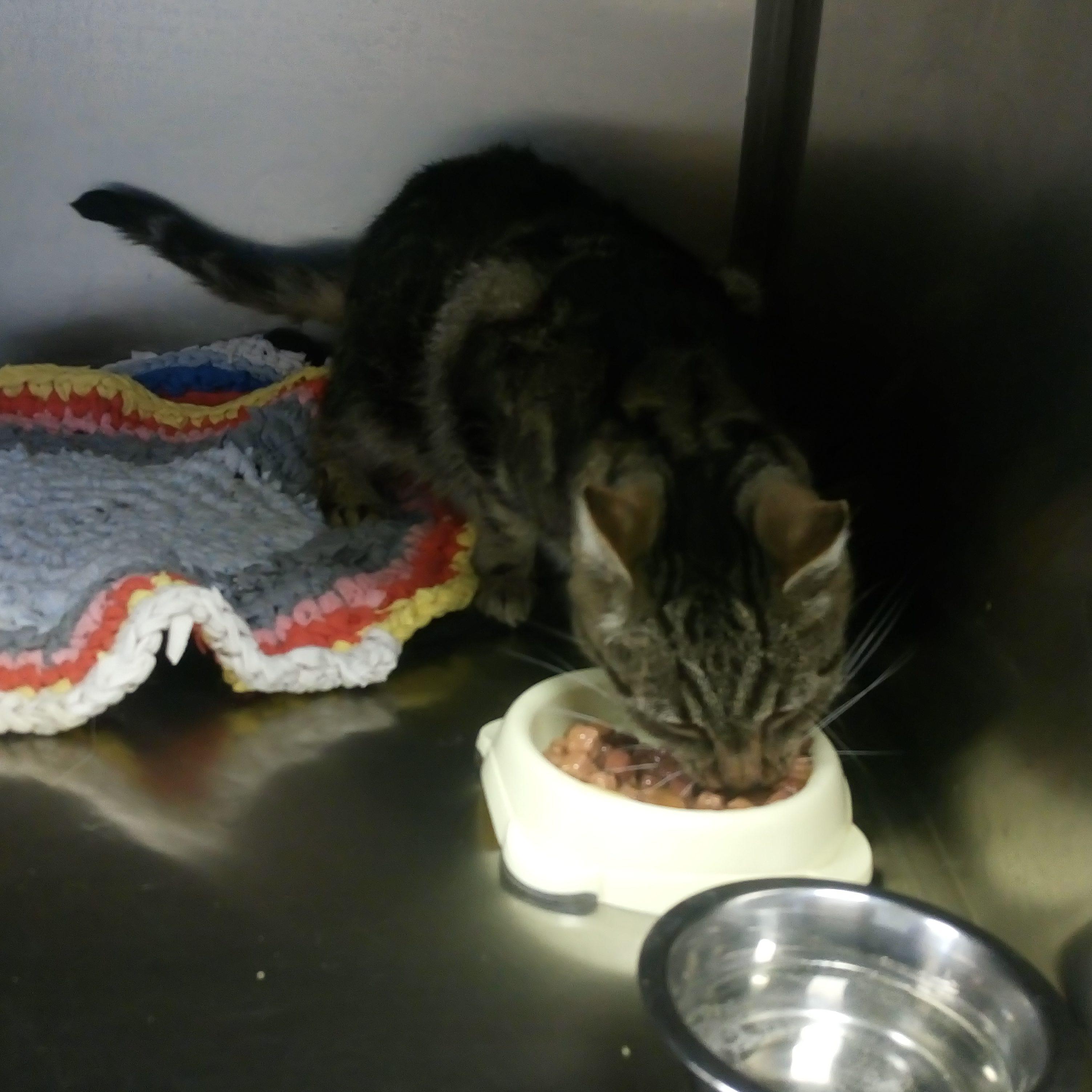 Cat_Megi_shelter_animals_izolators_приют_изолятор_сениор_ест_мягкий_корм