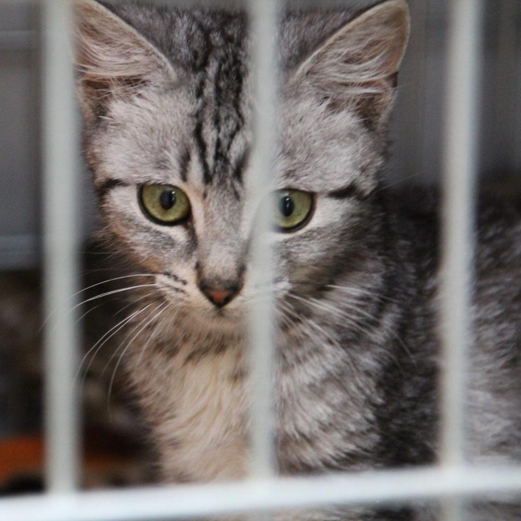 стерилизация дворовых котов