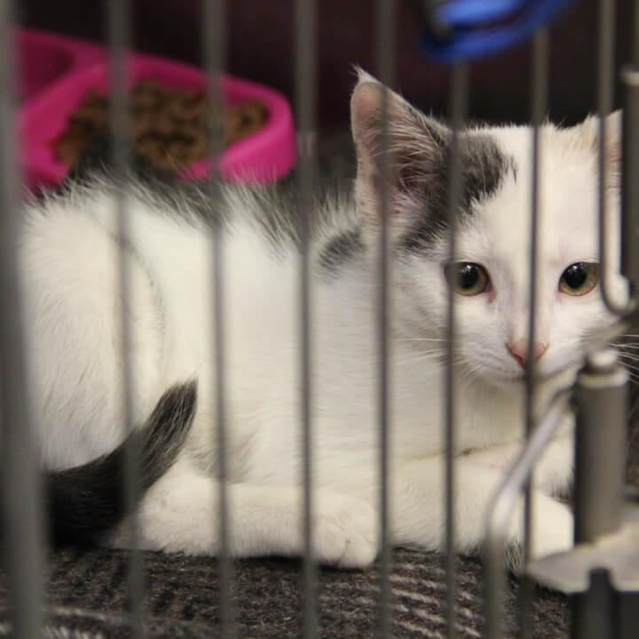 kaķu sterilizācija Daugavpils novadā